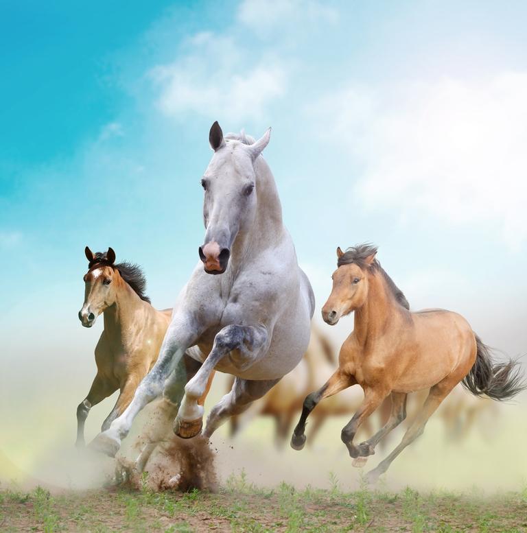 """3D Фотообои """"Лошади в дикой природе"""""""