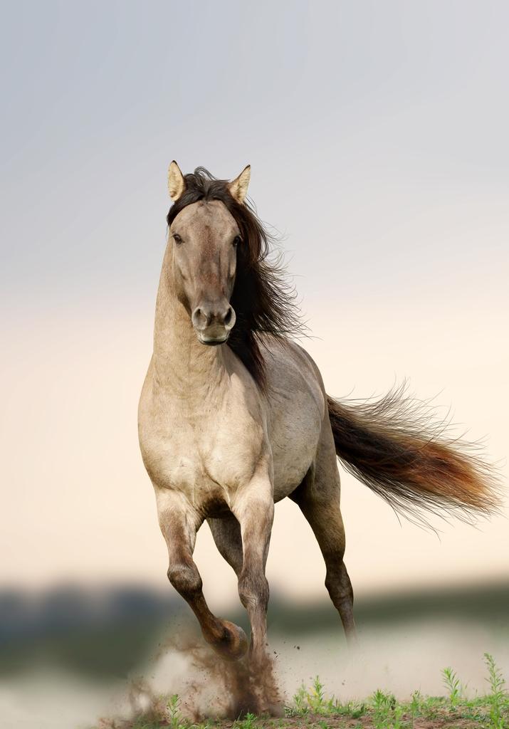 """3D Фотообои """"Лошадь"""""""