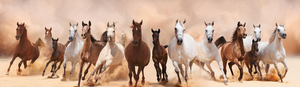 """3D Фотообои """"Лошади"""""""