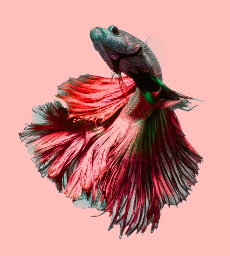 """3D Фотообои """"Красная рыбка"""""""