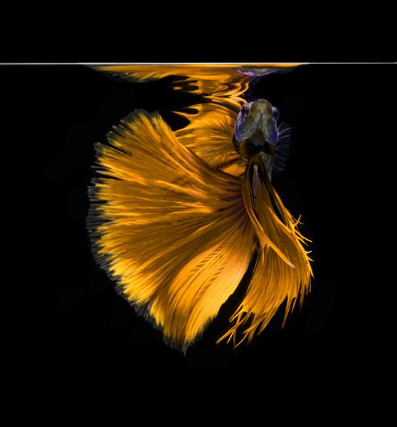 """3D Фотообои """"Золотая рыбка"""""""