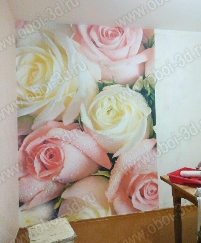 3D Фотообои «Салатово-розовые розы»